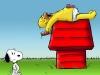 Povero Snoopy
