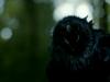 Il corvo a tre occhi